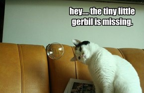 hey.... the tiny little gerbil is missing.