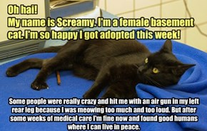 Screamy Got Adopted!