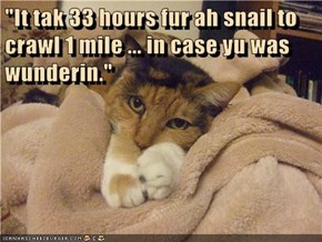 """It tak 33 hours fur ah snail to crawl 1 mile ... in case yu was wunderin."""