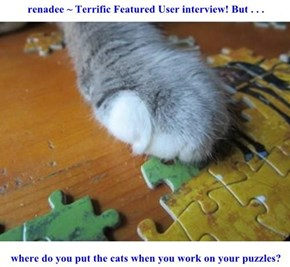 renadee ~ Terrific Featured User interview! But . . .   where do you put the cats when you work on your puzzles?
