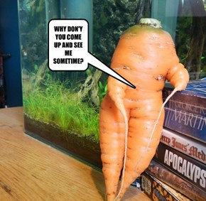 SEXY CARROT!
