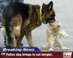 Breaking News - Police dog brings in cat burgler.