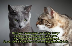 Have you headbonked our human today? Humans have feelings too, you know. They need to feel appreciated and loved. Go on, fake it if you have to; just one headbonk will do it.
