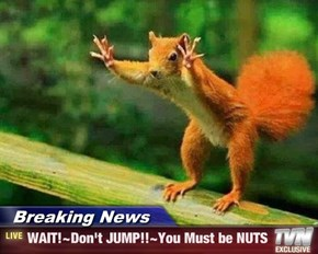 Breaking News - WAIT!~Don't JUMP!!~You Must be NUTS
