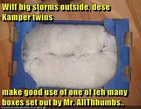 Wiff big storms outside, dese Kamper twins  make good use of one of teh many boxes set out by Mr. AllThhumbs..