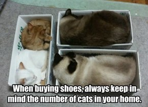 When buying shoes, always keep in mind the number of cats in your home.