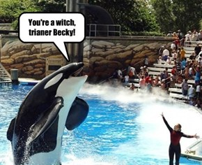 You're a witch, trianer Becky!