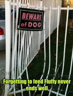 I Think Dog Food Costs More Than a New Gate