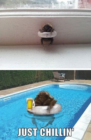 Summertime Buzz