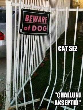 """CAT SEZ      """"CHALLUNJ AKSEPTID"""""""