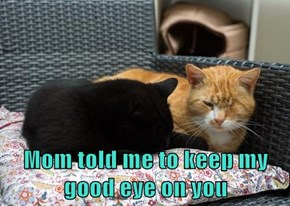 Mom told me to keep my               good eye on you