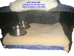 cua's Stray Cafe: striving to be the best stray bed & breakfast in the West