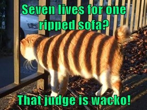 Seven lives for one ripped sofa?  That judge is wacko!