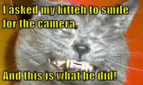 I asked my kitteh to smile for the camera,  And this is what he did!