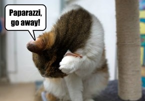 Paparazzi, go away!