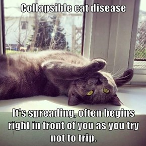Collapsible cat disease   It's spreading, often begins right in front of you as you try not to trip.