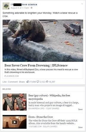 Wrong Bears!