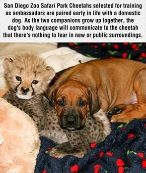 Cheetah's Best Friend