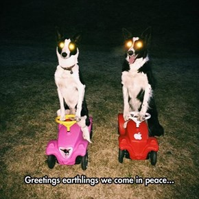 We Give You Peace, You GIve Us Piece of Bacon