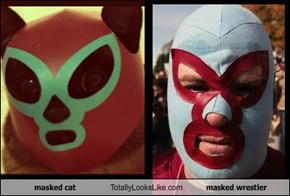 masked cat Totally Looks Like masked wrestler