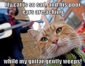 My cat is so sad, and his poor ears are aching  while my guitar gently weeps!