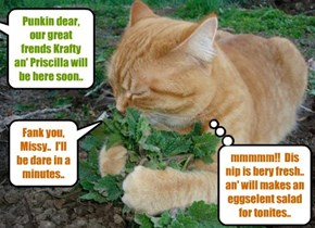 Punkin gathers in som fresh nip from his backyard garden for a tasty salad to accompany teh fishie dinner he is making tonite for frends..