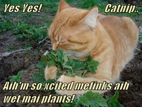 Yes Yes!                              Catnip..  Aih'm so xcited mefinks aih wet mai plants!