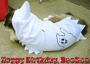 Happy Birthday, Dear BooBoo