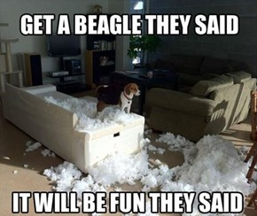 Well...The Beagle Looked Like He Had Fun