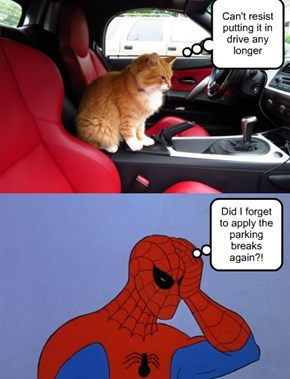My cat in the car senses are tingling!