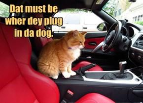 Safety for da dog.