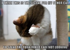 I THINK THIS IS THE SIGNAL FOR MY OTHER CAT  TO STEAL THE TUNA WHILE I AM NOT LOOKING