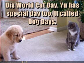 Puppy's Feeling Left Out on World Cat Day