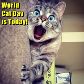 World                                                                               Cat Day                                                                                                                   is Today!