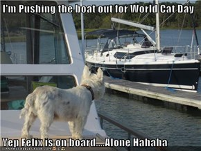 I'm Pushing the boat out for World Cat Day  Yep Felix is on board....Alone Hahaha