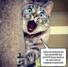 Happy LATE National Cat Day, Friday the 8th 2014!!!