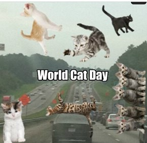Cats are taking over on World Cat Day!