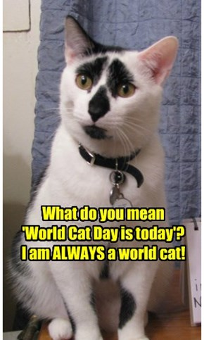 What do you mean  'World Cat Day is today'? I am ALWAYS a world cat!