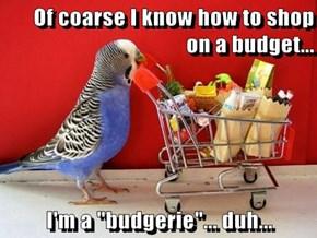 """Of coarse I know how to shop on a budget...  I'm a """"budgerie""""... duh..."""