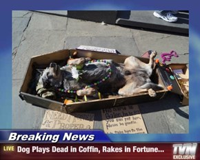 Breaking News - Dog Plays Dead in Coffin, Rakes in Fortune...