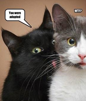 Lies of Basement Cat
