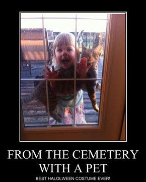 FROM THE CEMETERY WITH A PET