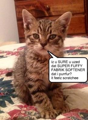 housekeeping: kitteh has standards