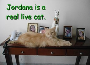 Jordana is a real live cat.