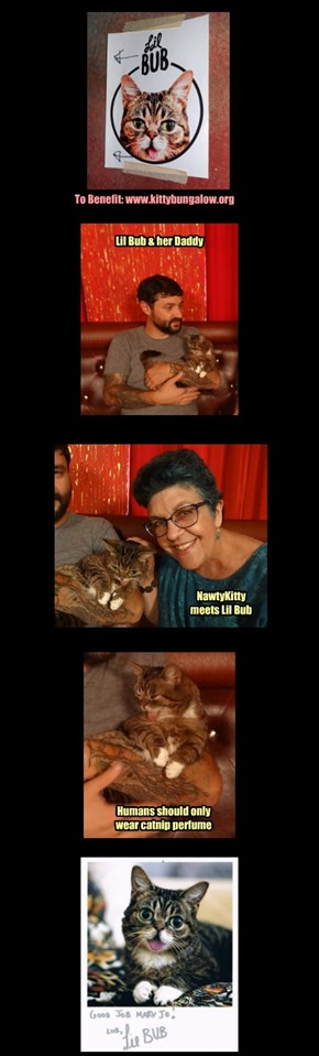 World Cat Day with Lil Bub