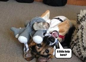 HELP. Stuffed toy invasion!