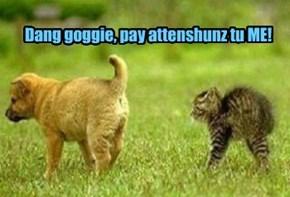 Dang goggie, pay attenshunz tu ME!