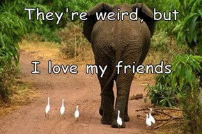 They're weird, but I love my friends