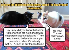 The Truth About Declawing!