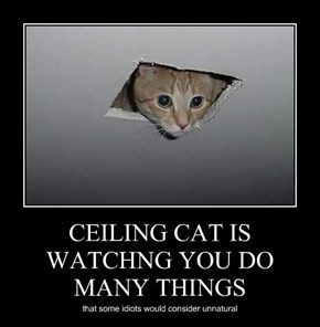 CEILING CAT IS WATCHNG YOU DO MANY THINGS
